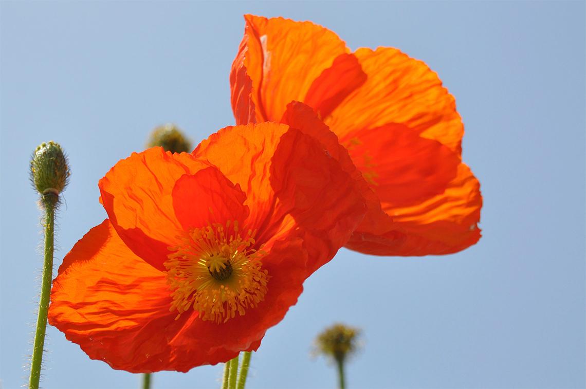 Poppy Resources Header Image