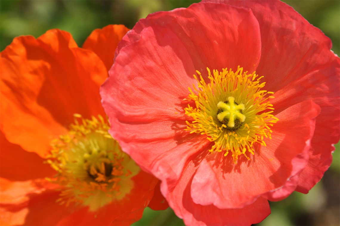 Poppy Services Header